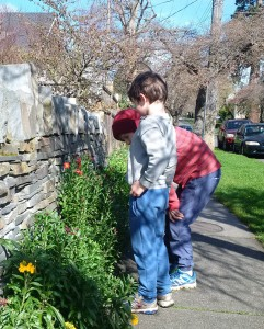 Wallflowers bridge the edge between sidewalk and sunny rock wall and offer color and scent to passersby.