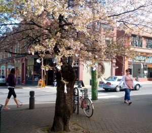 Scent in the City - Blossoms in Fernwood Square